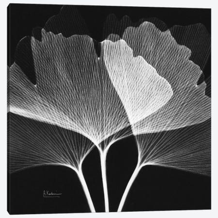 Ginko Square II Canvas Print #ALK267} by Albert Koetsier Canvas Print