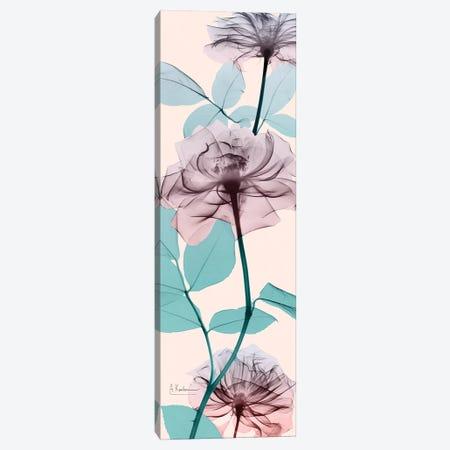 Spring Rose Canvas Print #ALK26} by Albert Koetsier Canvas Art Print