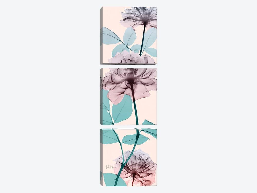 Spring Rose by Albert Koetsier 3-piece Canvas Artwork