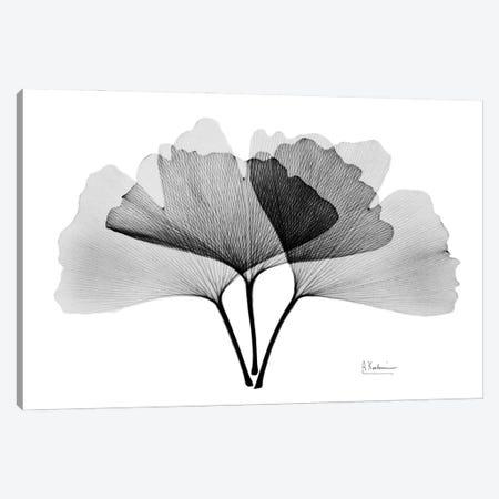 Inverted Ginko II Canvas Print #ALK270} by Albert Koetsier Art Print