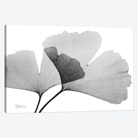 Inverted Ginko III Canvas Print #ALK271} by Albert Koetsier Canvas Art Print