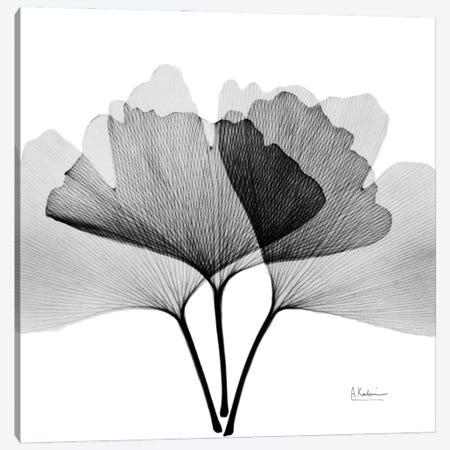 Inverted Ginko V Canvas Print #ALK273} by Albert Koetsier Canvas Art Print