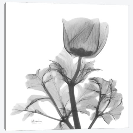 Lonely Anemone Canvas Print #ALK275} by Albert Koetsier Canvas Artwork