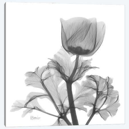Lonely Anemone Canvas Print #ALK275} by Albert Koetsier Canvas Artwork