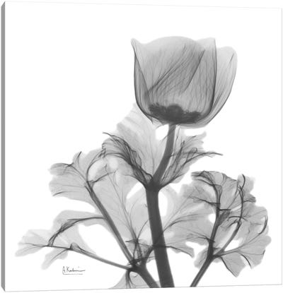 Lonely Anemone Canvas Art Print