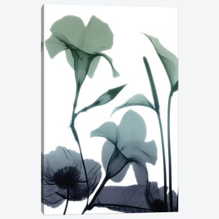 Mystic Bloom I Canvas Print #ALK276} by Albert Koetsier Canvas Art