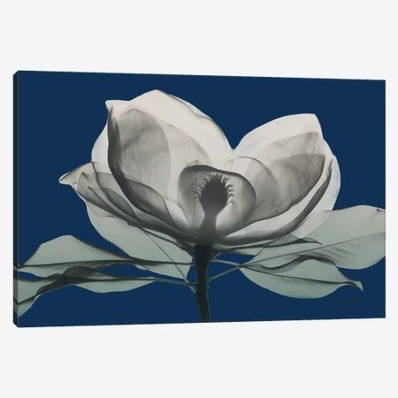 Navy Magnolia I Canvas Print #ALK282} by Albert Koetsier Canvas Art