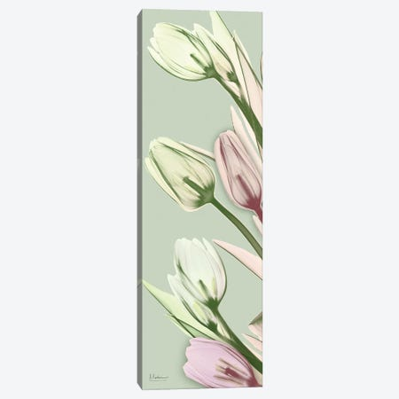 Spring Time Tulips Canvas Print #ALK28} by Albert Koetsier Canvas Artwork