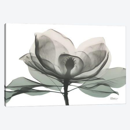 Sage Magnolia I Canvas Print #ALK294} by Albert Koetsier Canvas Wall Art