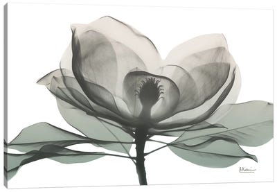 Sage Magnolia I Canvas Art Print