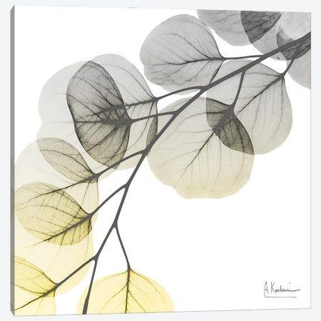 Brilliant Eucalyptus I Canvas Print #ALK298} by Albert Koetsier Art Print