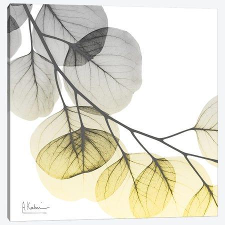 Brilliant Eucalyptus II Canvas Print #ALK299} by Albert Koetsier Art Print