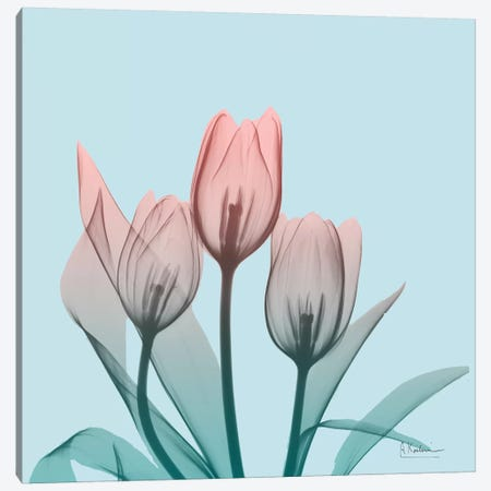 Awakening Tulips II Canvas Print #ALK2} by Albert Koetsier Canvas Print