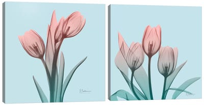 Awakening Tulips Diptych Canvas Art Print