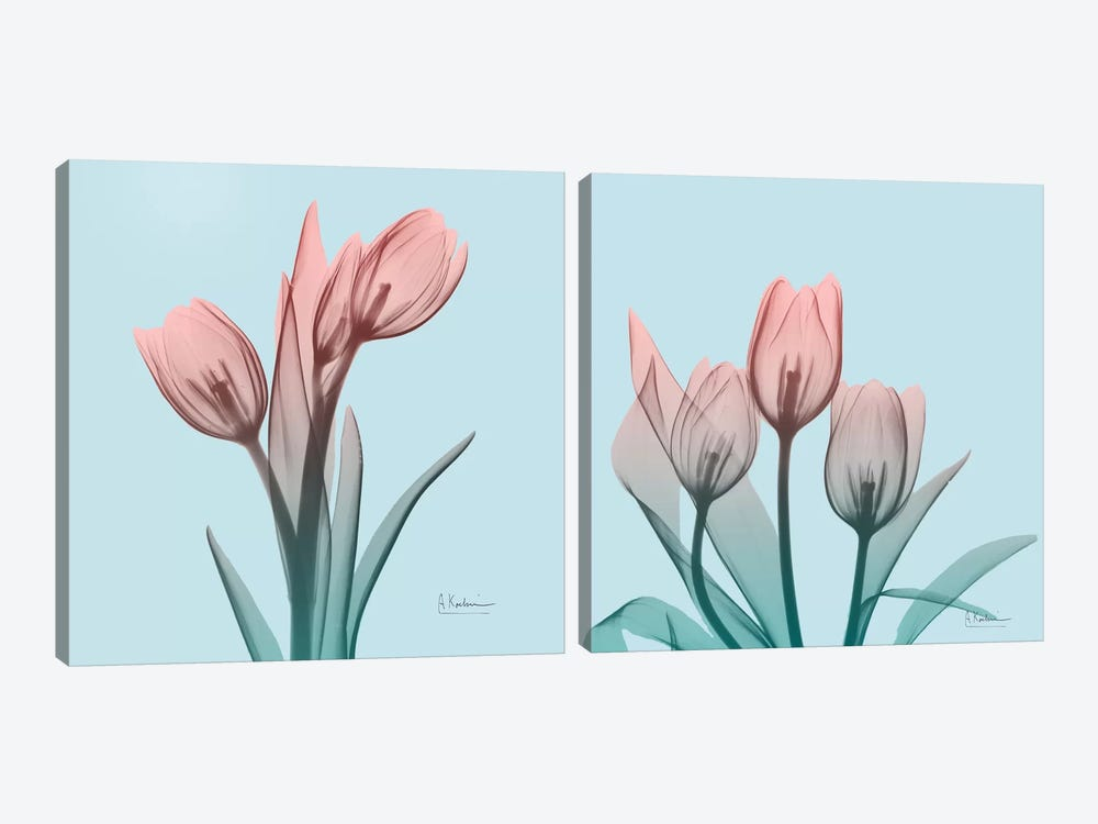 Awakening Tulips Diptych by Albert Koetsier 2-piece Canvas Print