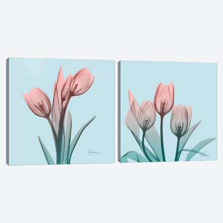 Awakening Tulips Diptych Canvas Print Set #ALK2HSET001} by Albert Koetsier Canvas Wall Art