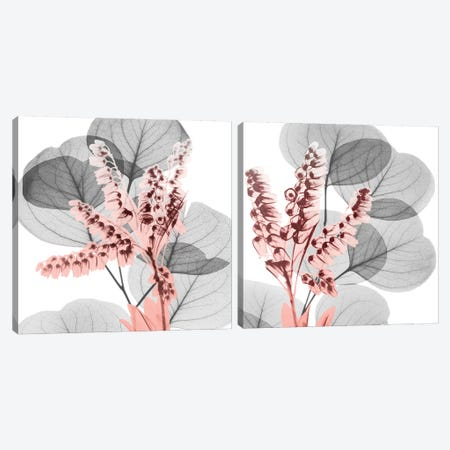 Eucalyptus Blush Diptych Canvas Print Set #ALK2HSET002} by Albert Koetsier Canvas Wall Art