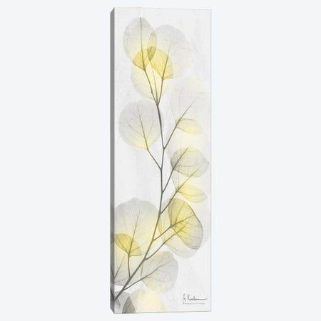 Eucalyptus Sunshine I Canvas Print #ALK302} by Albert Koetsier Canvas Art Print