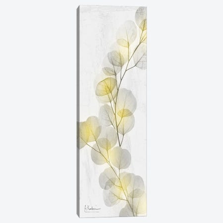 Eucalyptus Sunshine II Canvas Print #ALK303} by Albert Koetsier Canvas Art Print
