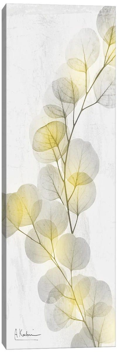 Eucalyptus Sunshine II Canvas Art Print