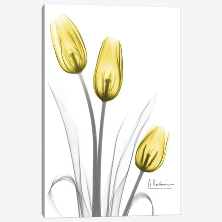 Illuminating Tulip Trio Canvas Print #ALK311} by Albert Koetsier Canvas Art