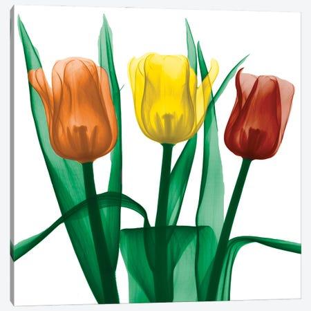 Jewel Embellished Tulips II Canvas Print #ALK314} by Albert Koetsier Canvas Art Print
