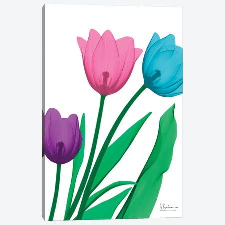 Shiny Tulips II Canvas Print #ALK336} by Albert Koetsier Canvas Print
