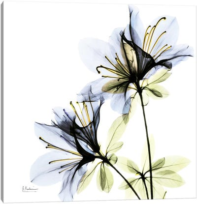 Azalea I Canvas Art Print