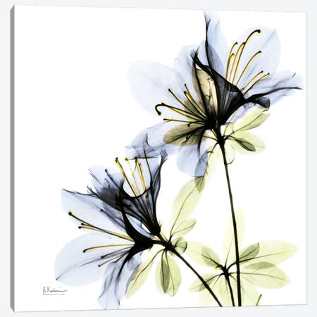 Azalea I Canvas Print #ALK33} by Albert Koetsier Canvas Art Print