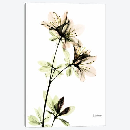 Azalea II Canvas Print #ALK34} by Albert Koetsier Canvas Artwork