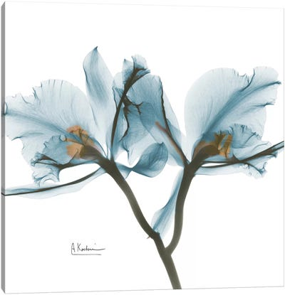 Blue Orchid Canvas Art Print