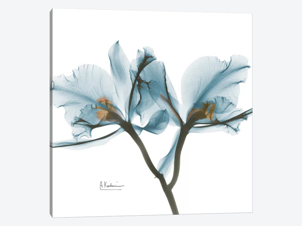 Blue Orchid by Albert Koetsier 1-piece Canvas Artwork