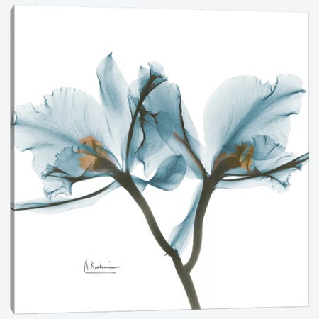 Blue Orchid 3-Piece Canvas #ALK35} by Albert Koetsier Canvas Artwork