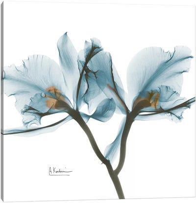 Blue Orchid Canvas Art Print