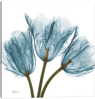 Blue Tulips Canvas Art Print