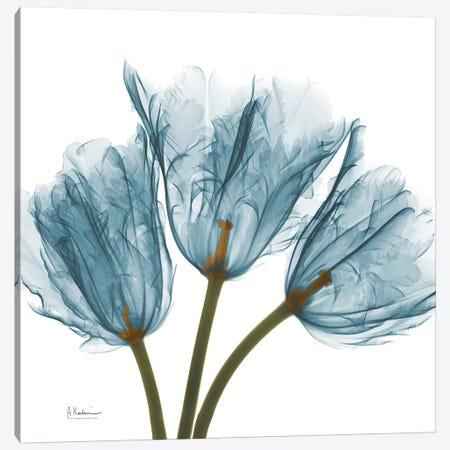 Blue Tulips 3-Piece Canvas #ALK37} by Albert Koetsier Canvas Art