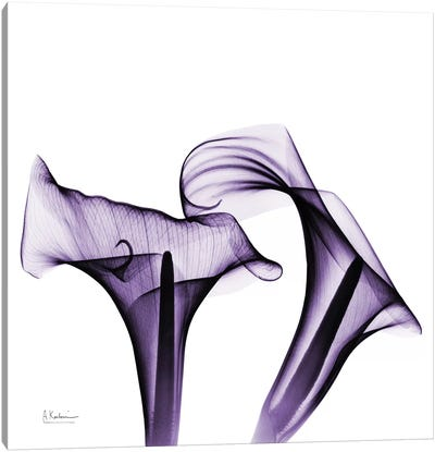 Calla Lilies I Canvas Art Print