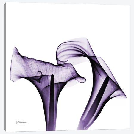 Calla Lilies I Canvas Print #ALK38} by Albert Koetsier Art Print
