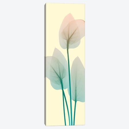 Blissful Bloom I Canvas Print #ALK3} by Albert Koetsier Canvas Art Print
