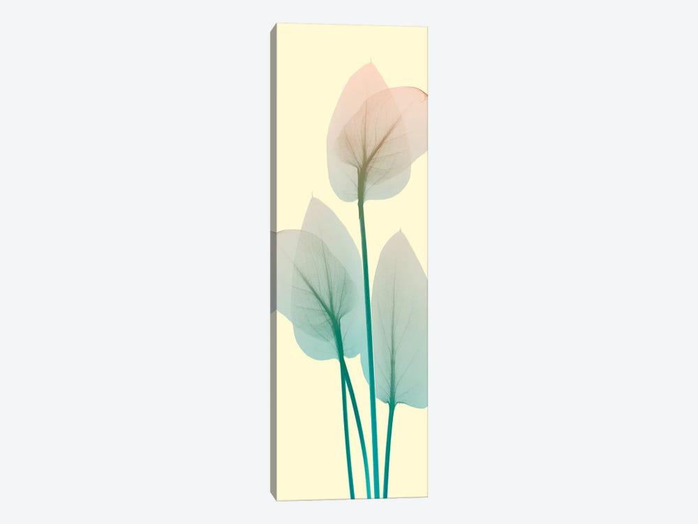 Blissful Bloom I by Albert Koetsier 1-piece Canvas Art Print