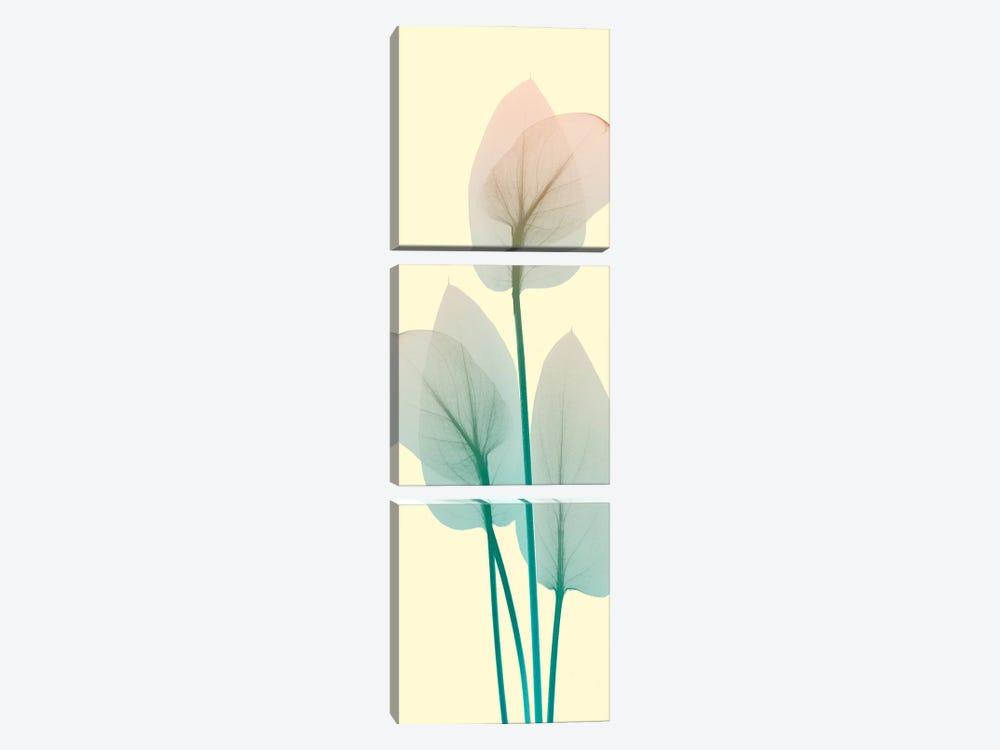 Blissful Bloom I by Albert Koetsier 3-piece Canvas Art Print