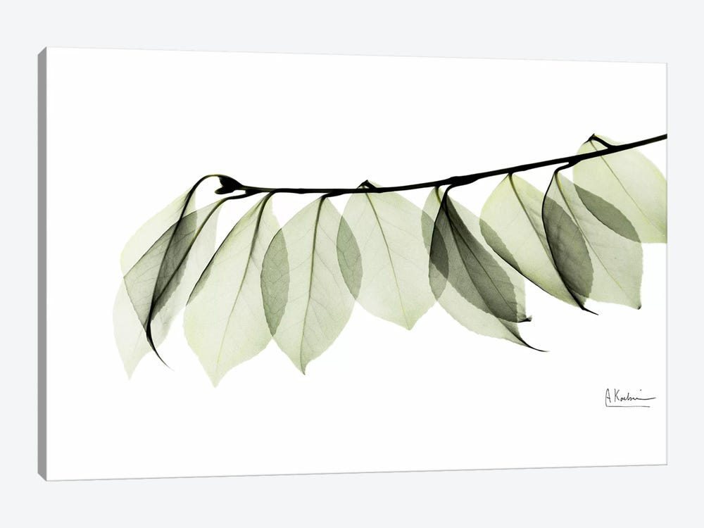 Camelia Leaf In White 1-piece Canvas Art