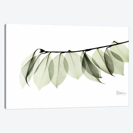 Camelia Leaf In White 3-Piece Canvas #ALK40} by Albert Koetsier Canvas Artwork