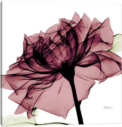 Chianti Rose I Canvas Art Print