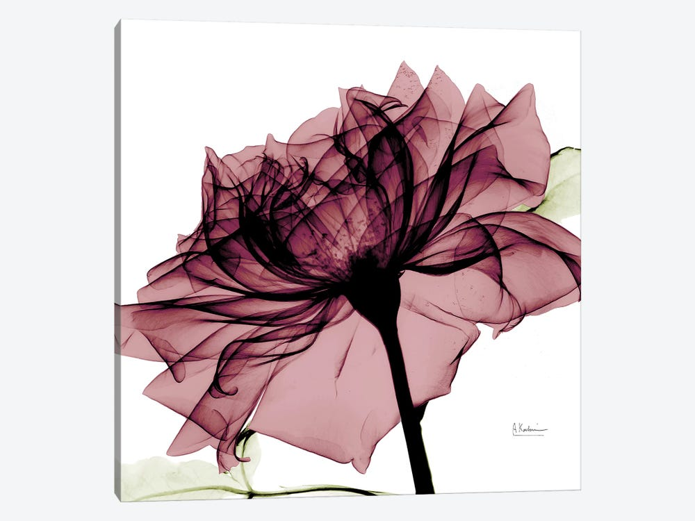 Chianti Rose I by Albert Koetsier 1-piece Canvas Art Print