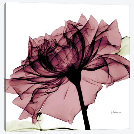 Chianti Rose I Canvas Print #ALK41} by Albert Koetsier Canvas Wall Art