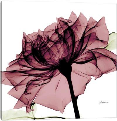 Chianti Rose I Canvas Art Print