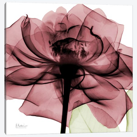 Chianti Rose II Canvas Print #ALK42} by Albert Koetsier Canvas Artwork
