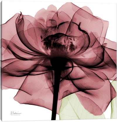 Chianti Rose II Canvas Art Print