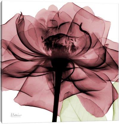 Chianti Rose II Canvas Art Print